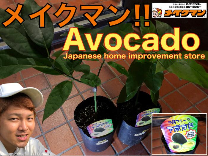 沖縄県のメイクマンでアボカドの苗を買ってきた!