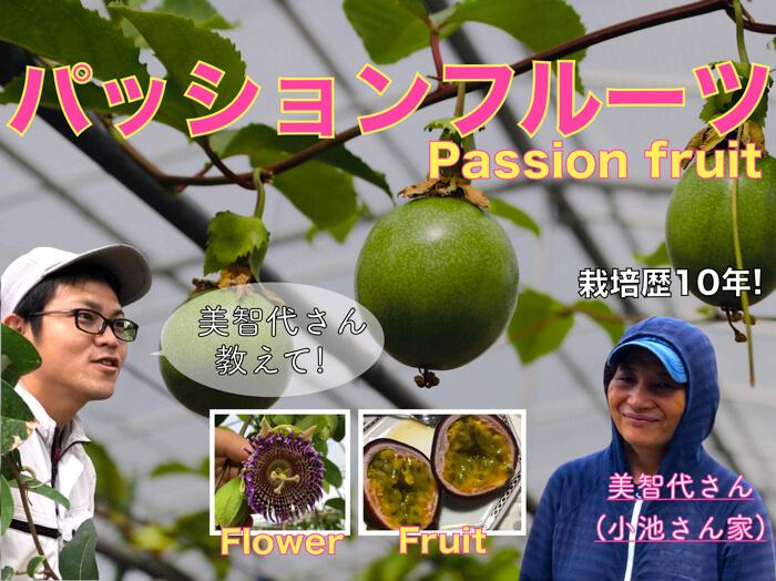 【小池さん家】パッションフルーツ栽培について!品種や栽培方法!目から鱗の動画公開!