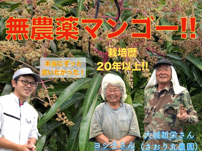【無農薬マンゴー】草生栽培で作る大城さんのマンゴーの作り方!特製肥料を学ぶ!【動画】