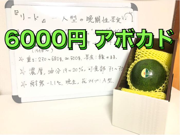 【アボカド品種紹介:リード】国産アボカドで6000円の値段がついている化け物品種!?
