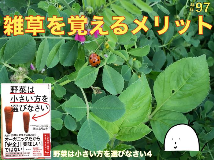 【#97】雑草を覚えるメリット!野菜作りには雑草が必要である!【野菜は小さい方を選びなさい04】