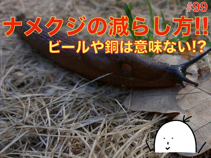 【#99】ナメクジの減らし方!5つの対策!銅やビールは効果が低い!?