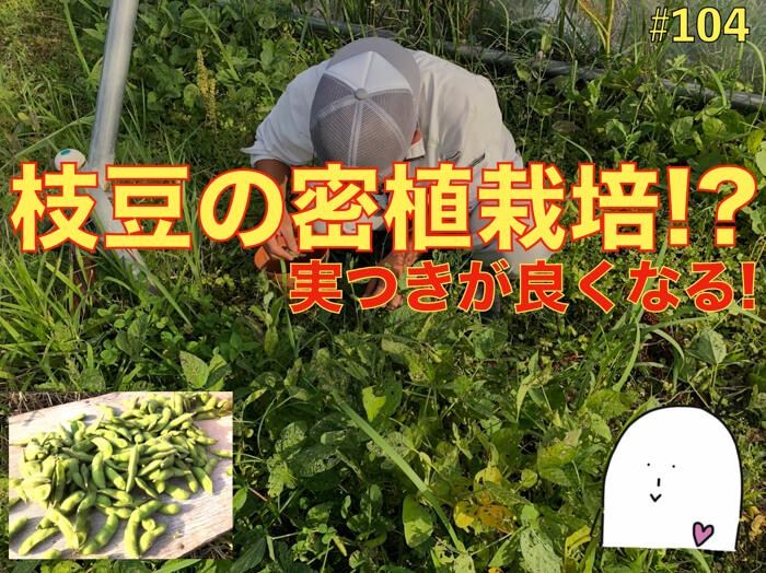 【#104】なぜ枝豆は密植をすると良いのか?夏の栽培の基本!