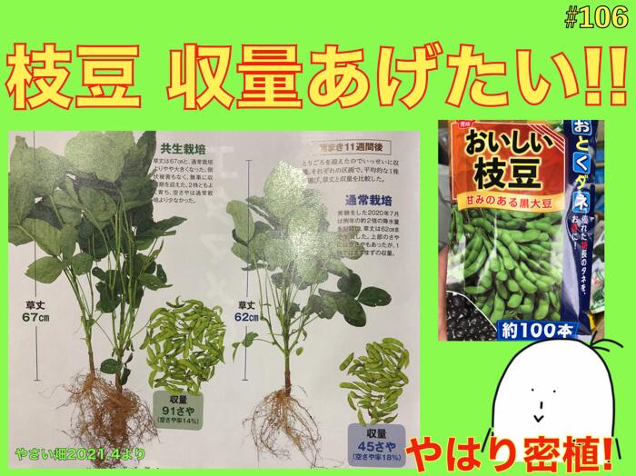 【#106】枝豆の育て方.収量を上げるとても簡単な方法!共生栽培!密植栽培の更なる利点.