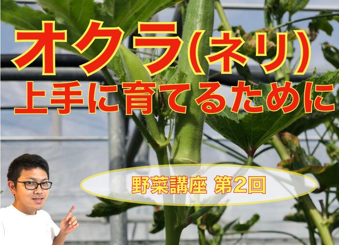 オクラの栽培方法!上手に育てるために知っておいた方が良いこと!