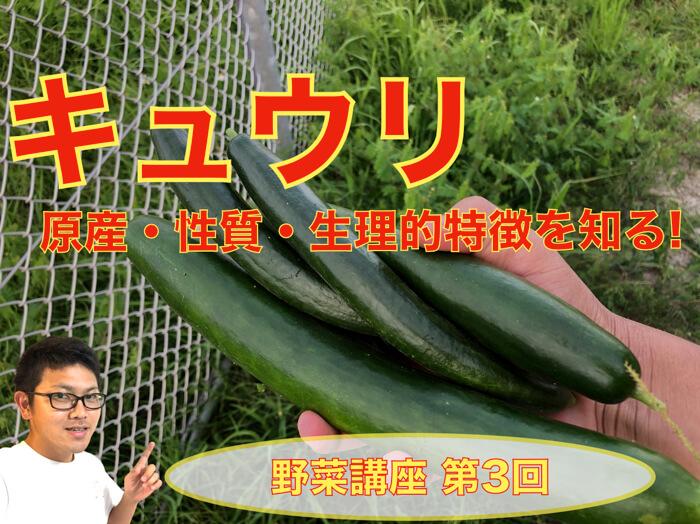 キュウリ(胡瓜)の性質,原産,特徴!気をつける点!知っておきたい基本的なこと!栽培に活かすために!