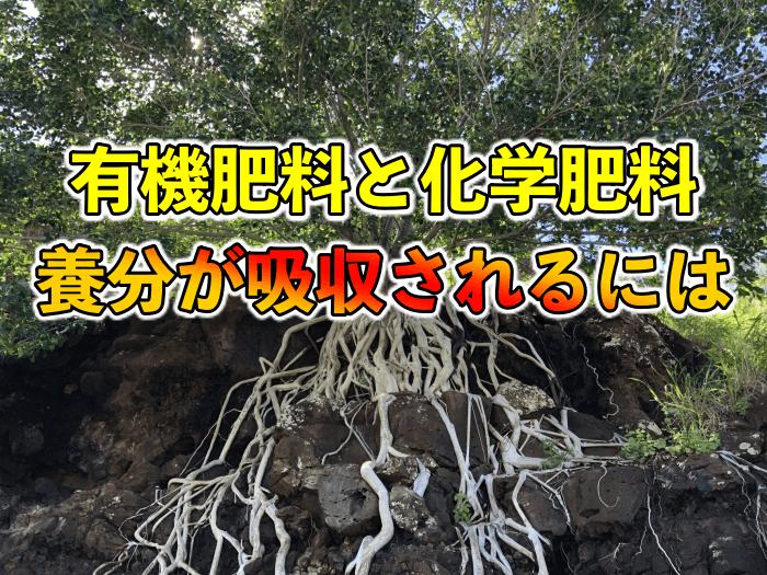 【#116】有機肥料と化学肥料の違いは!?植物は何を吸うのか?肥料の入れすぎで枯れる理由?