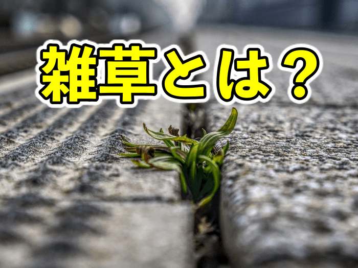 雑草とは何なのか?雑草はなぜ増えるのか?【雑草の特性リスト!】