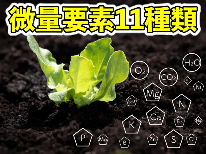 【#118】野菜の生育に必要な必須元素!カルシウム,マグネシウム,硫黄など11種類!!