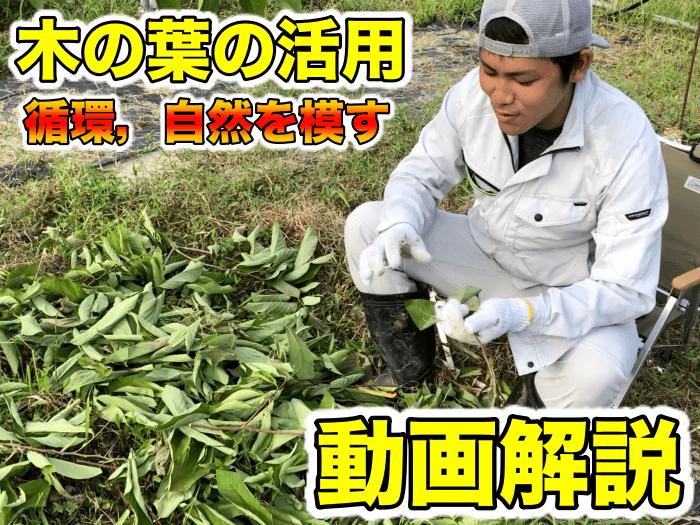 木の葉の活用方法,自然的に栽培する,循環,害虫,生物多様性などの話【動画解説】