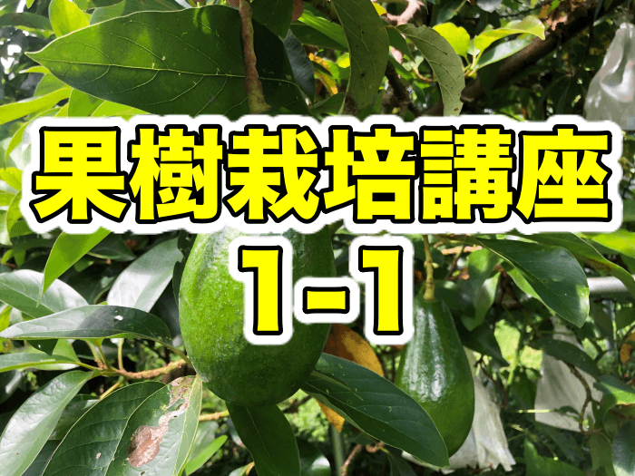 【果樹栽培講座1】これから果樹を育ててみたい人!初心者の方!必見!