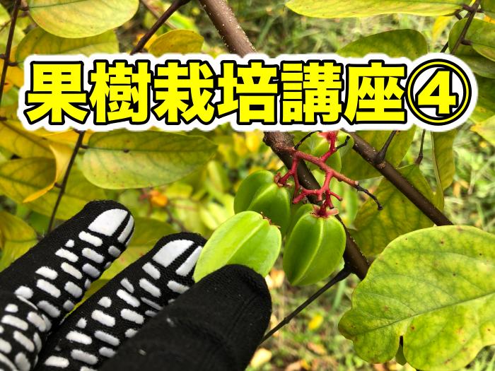 【果樹栽培講座④】果樹をしっかり育てるために!人工授粉の必要性,やり方,摘果のやり方,タイミングなど!